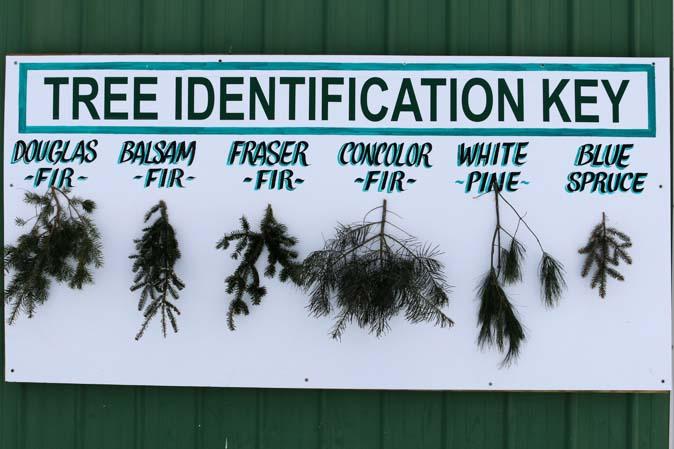 Welchen Tannenbaum hätten Sie gerne - Christmas Tree Farm in Amerika